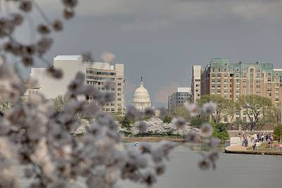 Tidal Photograph - Us Capitol - Cherry Blossoms - Washington Dc - 01138 by DC Photographer