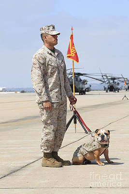 Camouflage Clothing Photograph - U.s. Marine And The Official Mascot by Stocktrek Images