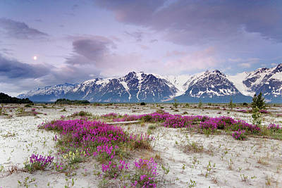 Vetch Photograph - Usa, Alaska, Alsek River Valley by Jaynes Gallery