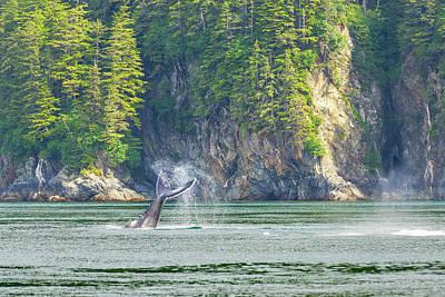 Animal Behavior Photograph - Usa, Alaska Humpback Whale Tail Lobbing by Jaynes Gallery