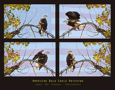 Photograph - Usa American Bald Eagle Watching by James BO Insogna