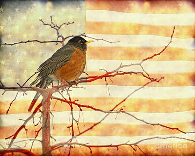 Photograph - Usa American Robin by James BO Insogna
