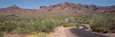 Phoenix Flowers Photograph - Usa, Arizona, Dreamy Draw Park, Cactus by Panoramic Images
