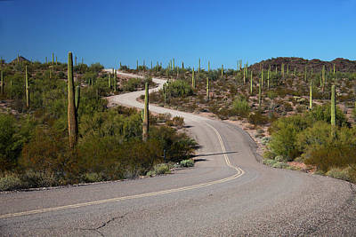Sonora Photograph - Usa, Arizona, Organ Pipe Cactus by Kymri Wilt