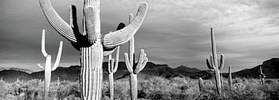 Usa, Arizona, Organ Pipe National Art Print by Panoramic Images