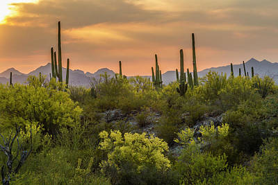 Desert Sunset Photograph - Usa, Arizona, Saguaro National Park by Jaynes Gallery