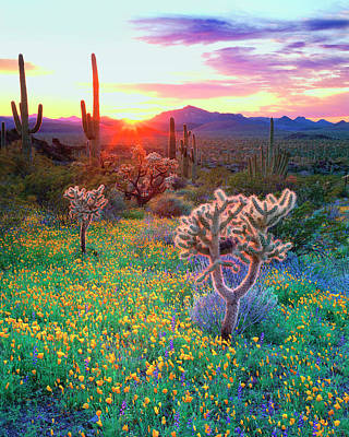 Usa, Arizona, Wildflowers And Cacti Art Print