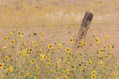 Barbed Wire Fences Photograph - Usa, California, Adin by Jaynes Gallery