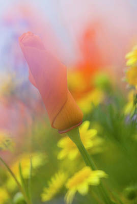 Abstract California Poppies Photograph - Usa, California, Antelope Valley by Jaynes Gallery