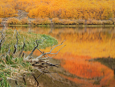 Usa, California Autumn Colors Reflect Art Print by Jaynes Gallery