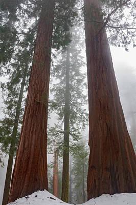 Judith Photograph - Usa, California Foggy Morning by Judith Zimmerman