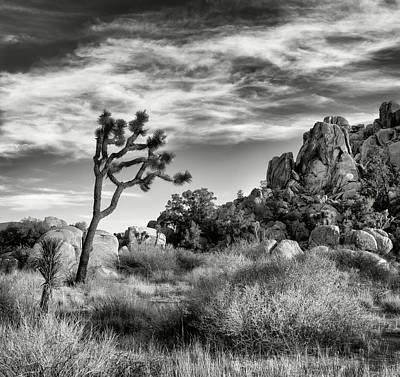 Arid Wall Art - Photograph - Usa, California, Joshua Tree National by Ann Collins