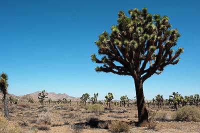 Mojave Photograph - Usa, California, Joshua Tree National by Bernard Friel