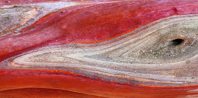 Manzanita Photograph - Usa, California, Mount Diablo State Park by Jaynes Gallery