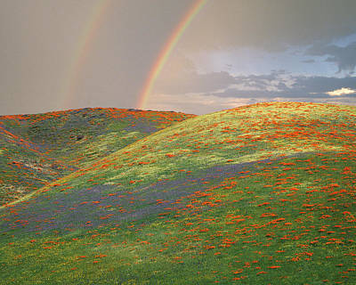 Double Rainbow Photograph - Usa, California, Near Gorman by Jaynes Gallery