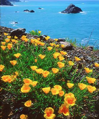 Usa, California, Poppies Art Print