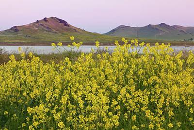 Mustard Yellow Photograph - Usa, California, Porterville by Jaynes Gallery