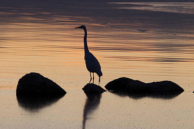 Genus Photograph - Usa, California, Salton Sea by Luc Novovitch