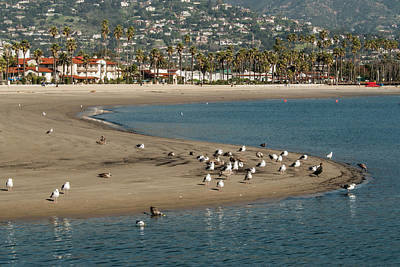 Flying Gull Photograph - Usa, California, Santa Barbara, Views by Alison Jones