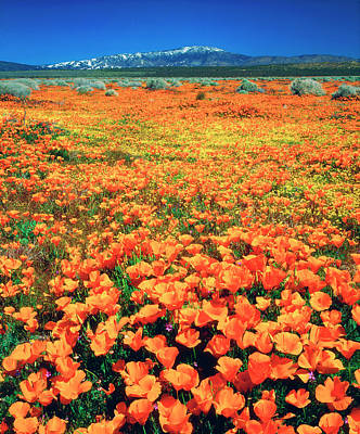 Abstract California Poppies Photograph - Usa, California, Snow-covered Tehachapi by Jaynes Gallery