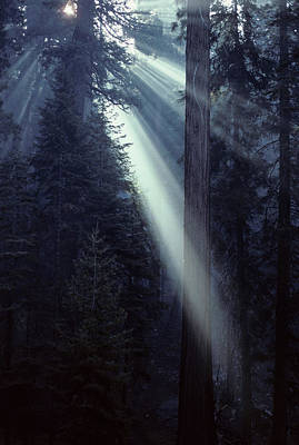 Forests And Forestry Photograph - Usa, California, Sun, Smoke, Forest by Gerry Reynolds