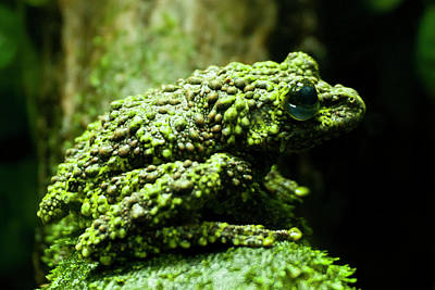 Frog Photograph - Usa, Colorado, Denver, Denver Zoo by Jaynes Gallery