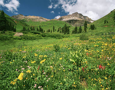 Hellebore Photograph - Usa, Colorado, Mt Sneffels Wilderness by Adam Jones