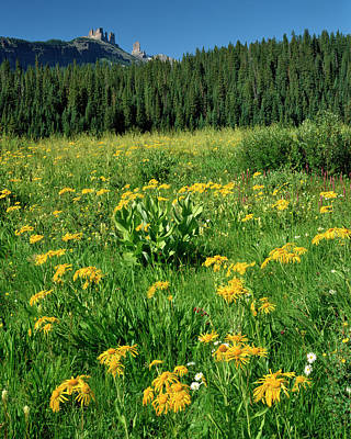 Sneezeweed Photograph - Usa, Colorado, West Elks Wilderness by Jaynes Gallery