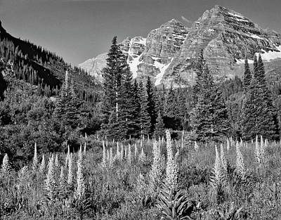 White Mountain National Forest Photograph - Usa, Colorado, White Mountain National by Jaynes Gallery