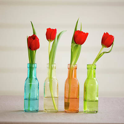 Florida Flowers Photograph - Usa, Florida, Celebration, Tulips by Hollice Looney