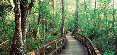 Florida Bridge Photograph - Usa, Florida, Fakahatchee Strand State by Panoramic Images
