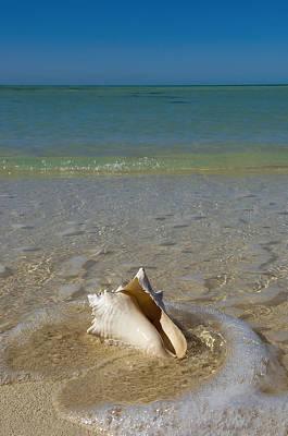 Close Focus Nature Scene Photograph - Usa, Florida, Florida Keys, Conch Shell by Chris Parker