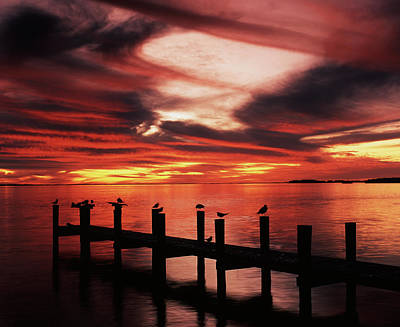 Usa, Florida, Fort Meyers, Silhouetted Art Print by Adam Jones