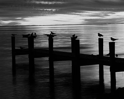 Usa, Fort Myers, View Of Birds On Pier Art Print
