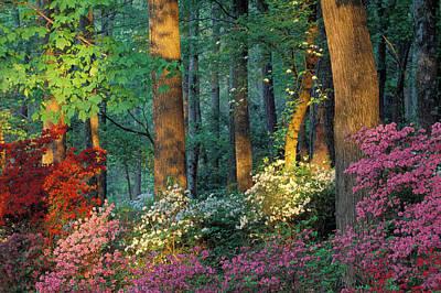 Callaway Gardens Art Prints