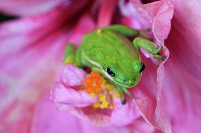 Frog Photograph - Usa, Georgia, Savannah, Green Frog by Joanne Wells
