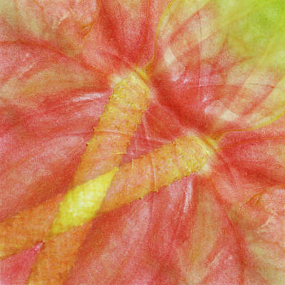 Anthurium Photograph - Usa, Hawaii Anthurium Flower Montage by Jaynes Gallery