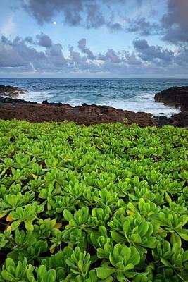 Poipu Photograph - Usa, Hawaii, Kauai, Poipu by Jaynes Gallery