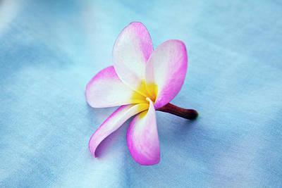 Usa, Hawaii, Oahu, Plumeria Flowers Art Print by Terry Eggers