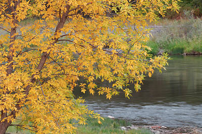Salmon River Photograph - Usa, Idaho, Salmon River, Fall by Gerry Reynolds