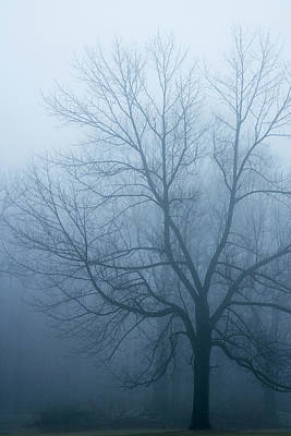 Indiana Photograph - Usa, Indiana Skeleton Tree In Fog by Jaynes Gallery