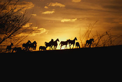 Thoroughbred Farm Photograph - Usa, Kentucky, Horses Running, Sunset by Panoramic Images