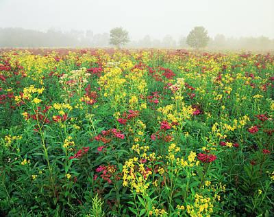 Yarrow Photograph - Usa, Kentucky, Late Summer Field by Adam Jones