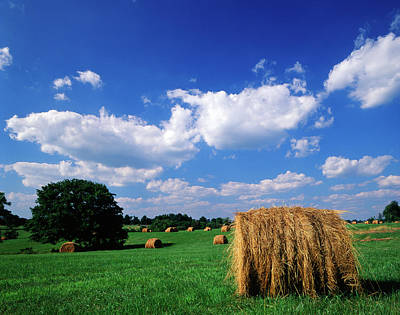 Lexington Photograph - Usa, Kentucky, Lexington, View Of Hay by Adam Jones