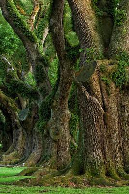 Oak Alley Photograph - Usa, Louisiana, St by Jaynes Gallery