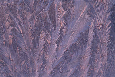 Usa, Michigan, Feathery Frost Patterns Art Print