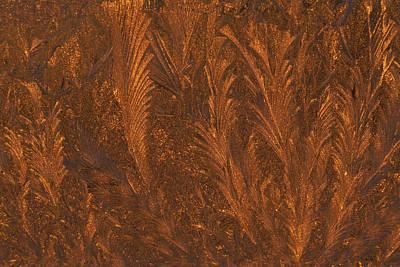 Usa, Michigan, Golden Frost Patterns Art Print
