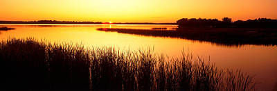 Deer Lake Photograph - Usa, Minnesota, Otter Tail County, Deer by Panoramic Images