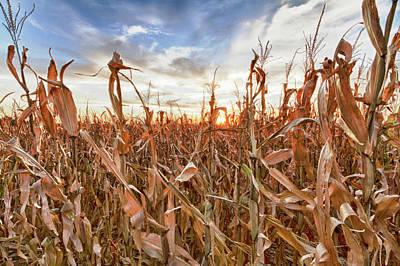 Cornfield Photograph - Usa, Nebraska, Near Omaha by Christopher Reed