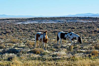 Usa, Nevada, Wild Horses Grazing Print by Bernard Friel
